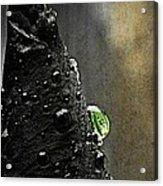 Green Droplet  Acrylic Print