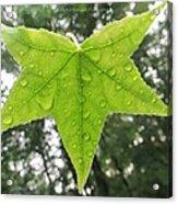 Green Droplets Acrylic Print