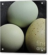 Green Eggs Acrylic Print