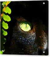 Green Eyed Black Cat Acrylic Print