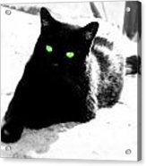 Green Eyed Kitty Acrylic Print