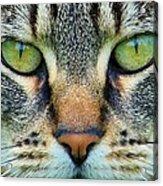 Green Eyez Acrylic Print