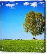 Green Field Landscape With A Single Tree Acrylic Print