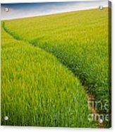 Green Field Acrylic Print