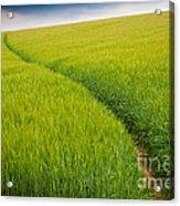 Green Field Acrylic Print