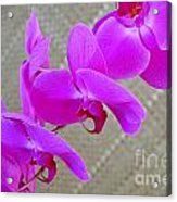 Green Field Sweetheart Orchid No 3 Acrylic Print