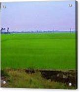 Green Fields With Birds Acrylic Print
