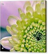 Green Flower2 Acrylic Print by Amr Miqdadi