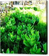 Green Flowers Acrylic Print