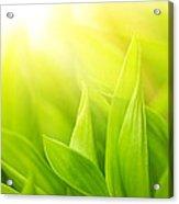 Green Foliage Acrylic Print by Boon Mee
