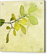 Green Foliage Series Acrylic Print