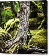 Green Forest Acrylic Print by Aaron Aldrich