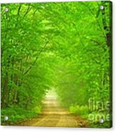 Green Forest Tunnel Acrylic Print