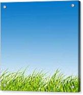 Green Fresh Grass On Blue Sky Panorama. Acrylic Print