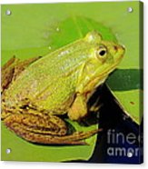 Green Frog 2 Acrylic Print