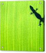 Green Gecko Leaf Acrylic Print