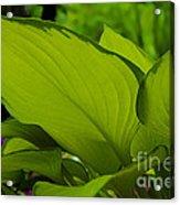 Green Giants Acrylic Print