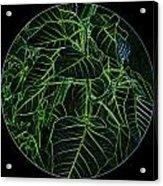 Green Glow Acrylic Print