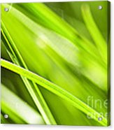 Green Grass Abstract Acrylic Print