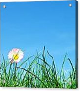 Green Grass And A Flower Acrylic Print