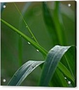 Green Grass Of Summer Acrylic Print