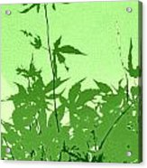 Green Green Haiku Acrylic Print