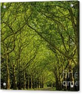 Green Green World Acrylic Print