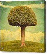 Green Growing Lullaby Acrylic Print