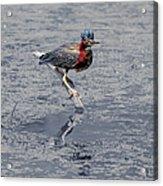 Green Heron In Swannanoa North Carolina Acrylic Print
