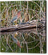 Green Heron Reflections Squared Acrylic Print