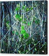 Green In Winter Acrylic Print