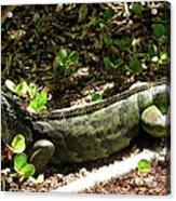Green Inguana In The Shrubs I Acrylic Print