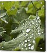 Green Leaf And  Fresh Water Pearl Acrylic Print