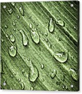 Green Leaf Background With Raindrops Acrylic Print