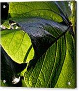 Green Leaf I Acrylic Print