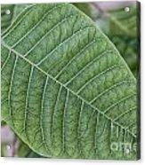 Green Leaf Macro Acrylic Print
