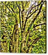 Green Leafy Trees Acrylic Print