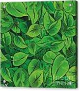 Green Leaves - V1 Acrylic Print