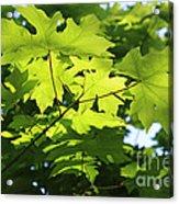 Green Leaves Canvas Acrylic Print