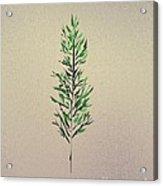 Green Leaves Acrylic Print by John Krakora