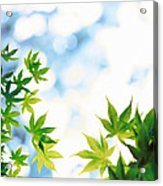 Green Leaves On Mottled Cloudy Sky Acrylic Print