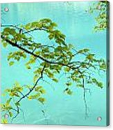 Green Leaves Over Blue Water Acrylic Print