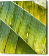 Green Leaves Series 14 Acrylic Print