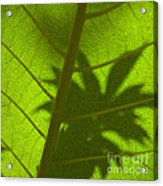 Green Leaves Series 3 Acrylic Print