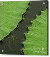 Green Leaves Series  4 Acrylic Print