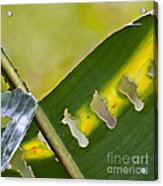 Green Leaves Series  5 Acrylic Print