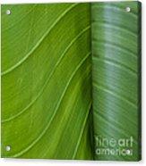 Green Leaves Series  6 Acrylic Print