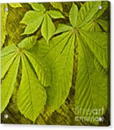 Green Leaves Series Acrylic Print by Heiko Koehrer-Wagner