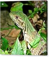 Green Lizard Close-up Acrylic Print