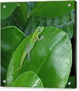 Green Lizard Acrylic Print